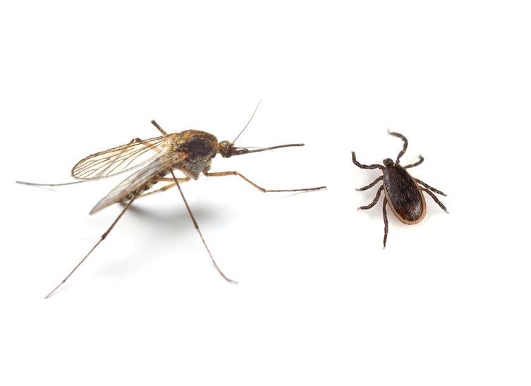 tick-mosquito