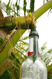 kookosmahl