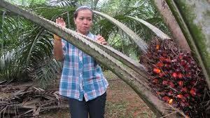 palmi6li