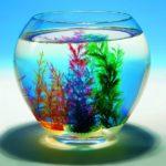 GOKI maagiline merikarp Peggy Diggledey akvaariumis
