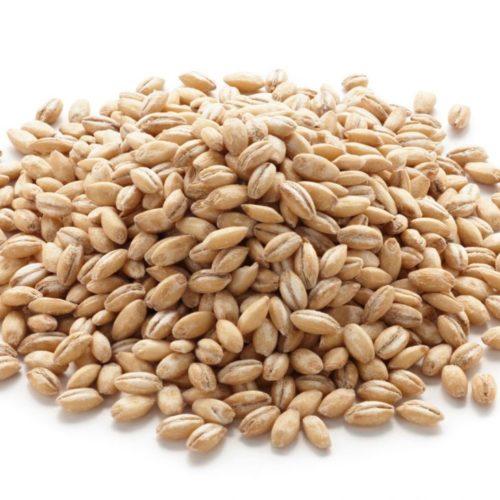 Ячменное зерно с хутора Каарли